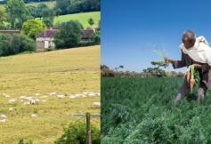 Le CESE s'est prononcé sur l'agriculture familiale
