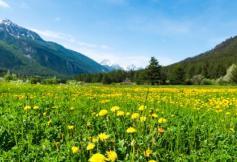 Projet de loi de modernisation, de développement et de protection des territoires de montagne