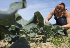 L' agroécologie s'expose sur les grilles du Palais d'Iéna