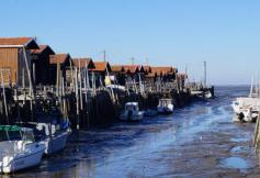 """Déplacement section de l'agriculture, de la pêche et de l'alimentation - """"Les fermes aquacoles marines et continentales : enjeux d'un développement réussi"""""""