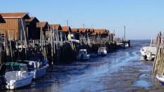 Ostréiculture et pisciculture : la section de l'agriculture en Nouvelle Aquitaine